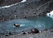 Aconcagua20077