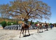 ethio_31-03-2013_10-27-02