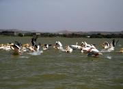 ethio_08-04-2013_12-29-51