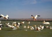ethio_08-04-2013_12-29-58