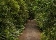 Regenwald im Manuel Antonio N.P.