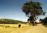 ethio_02-04-2013_12-02-20