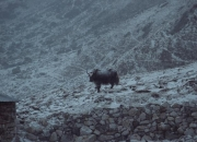 Nepal20046