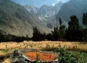 Pakistan00053