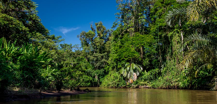 Der Fluss durch den Dschungel