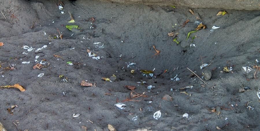 Leeres Nest im Sand