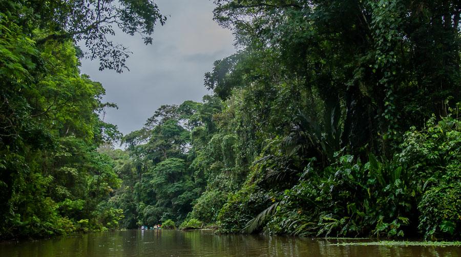 In einem Seitenarm des Flusses. Dichter Regenwald