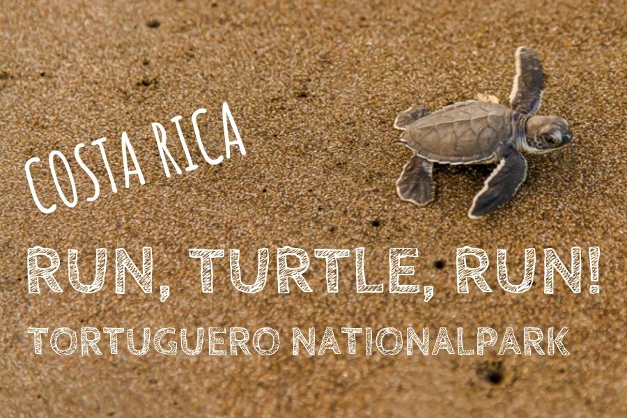 Tortuguero Banner